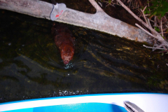 paddle de nuit castor