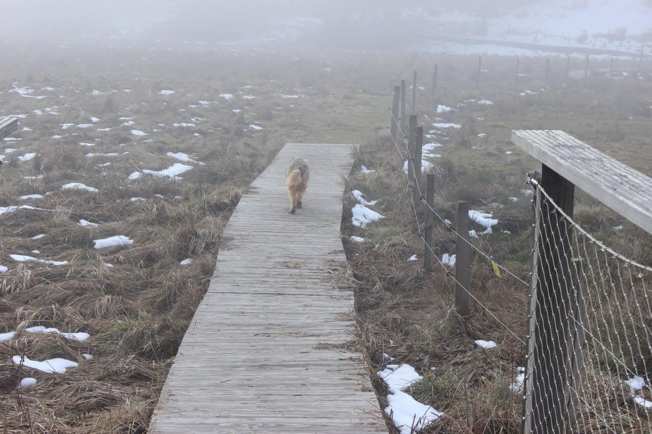 chien aux abords du lac du moulinet en hiver